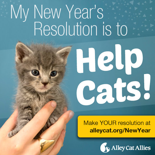 My New Year's Resolution is to Help cats! - Alley Cat Allies