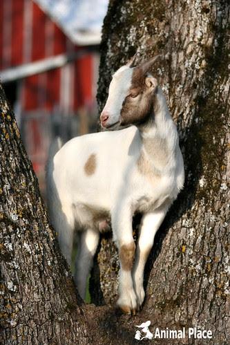Noah in a tree
