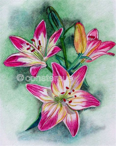 beautiful flower drawings  realistic color pencil
