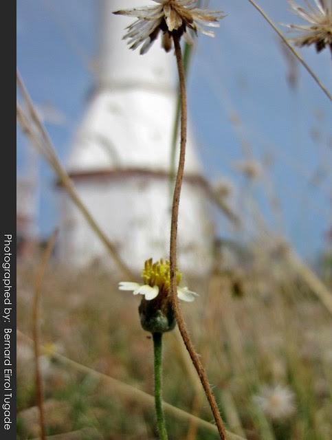 Bolinao Lighthouse 4
