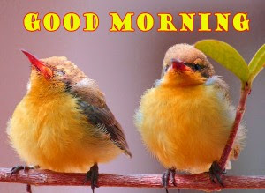 668 Sweet Good Morning Images Pics Hd Download