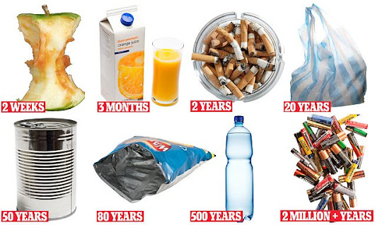 How long does litter take to rot?