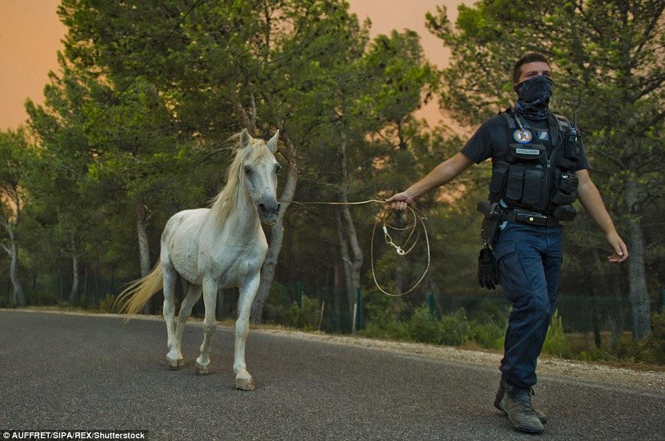 Um gendarme leva um cavalo para a segurança de uma área ameaçada pelas chamas