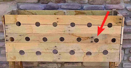 She Drills 19 Holes Into This Wooden Planter Box. Watch What Happens 5 Months Later… INCREDIBLE!