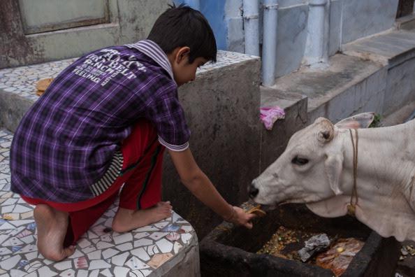 Eid al-Adha 2015: Bombay High Court refuses to lift beef