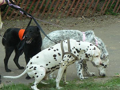 3 chiens CP.jpg
