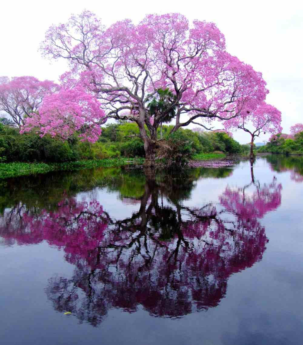 http://all-that-is-interesting.com/wordpress/wp-content/uploads/2012/04/piuva-tree-brazil-photograph.jpg