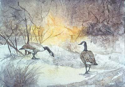 dawn Canada geese