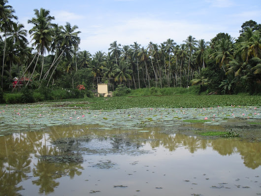 There're no frogs in this pond : – ' Thavalayilla Kulam ' at Parassala, Thiruvananthapuram