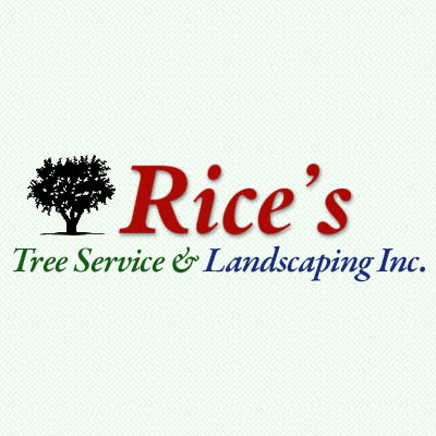 3 Tips for Healthy Trees | Rice's Tree Service & Landscaping