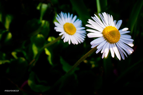 Cercando il Sole ..... by maurovacca