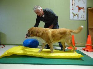 exercícios cães idosos