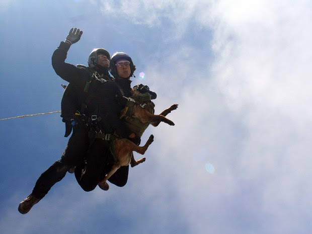 Cão paraquedista Chivunck no primeiro voo livre duplo da Brigada de Infantaria Paraquedista do Exército Brasileiro (Foto: 3º Sargento Marco Antônio Messias/Cometas)