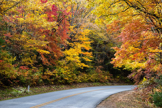 Asheville 2018 Fall Color Report & Forecast | Scenic Views | Asheville, NC's Official Travel Site