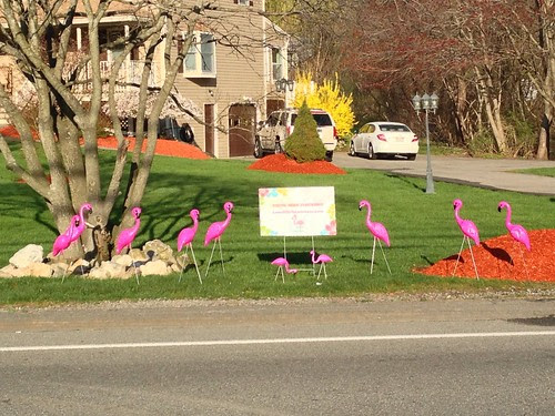 You've been flocked!