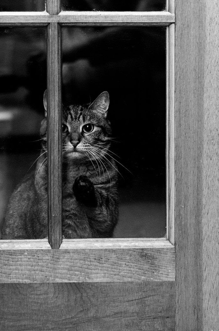 Inhuman curiosity