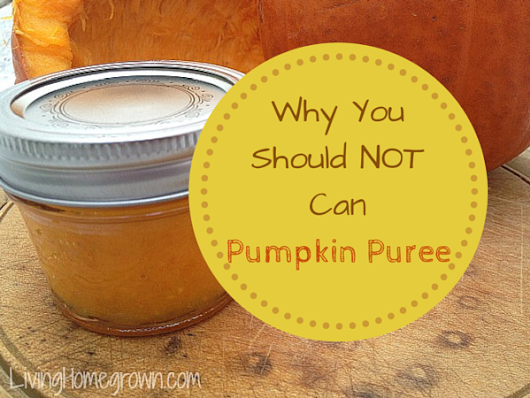 Why Canned Pumpkin Puree is a No No - Living Homegrown