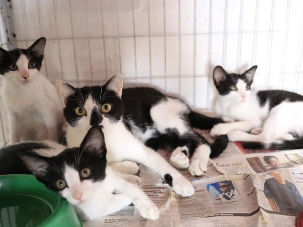Animais estarão expostos na Prefeitura de Caruaru até a sexta-feira (13) (Foto: Rafael Lima/Secom Caruaru)