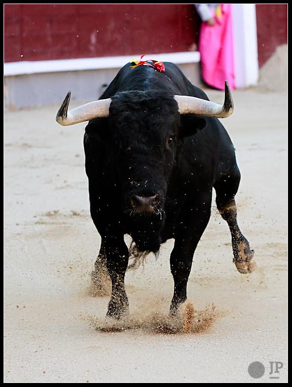 Toro-de-Valdefresno-7