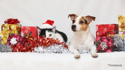 Great Holiday Gifts for Dogs and Cats