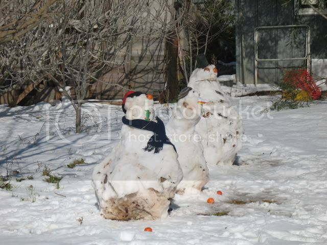 Shiloh Snow 12