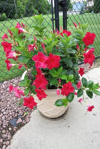 $50 plant