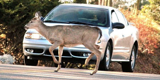 More people are getting into crashes with wildlife in Colorado