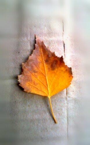Я как лист на ветру