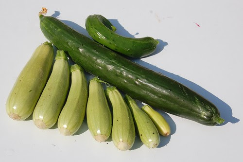 courgettes and cucumbers