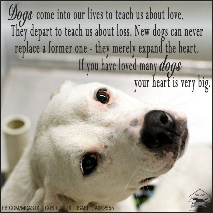 Quotes About My Dog 343 Quotes