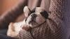 Seguros de decesos para mascotas: ¿necesidad o moda?