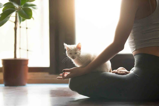 Why Pet Yoga is a Fast-Growing Trend