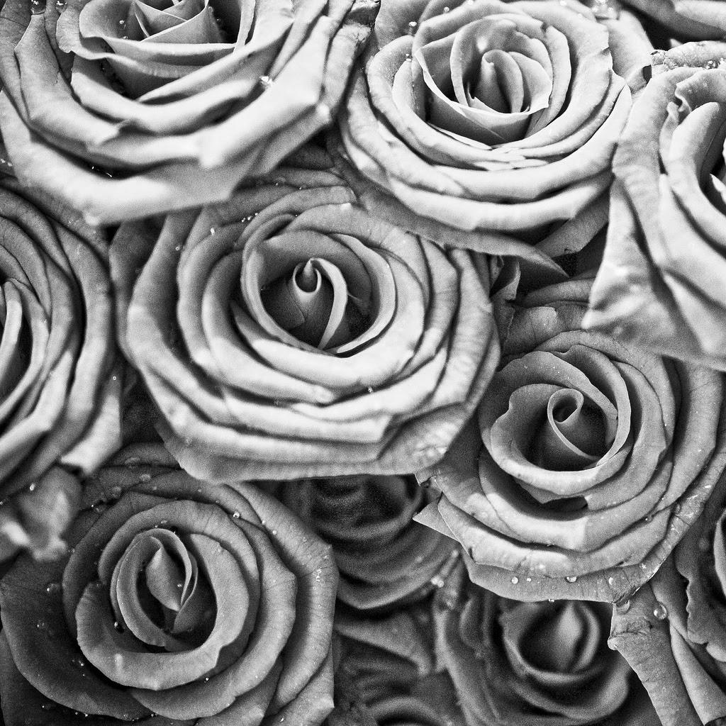 Black White Roses Ipad Wallpaper Download Free Ipad Wallpapers