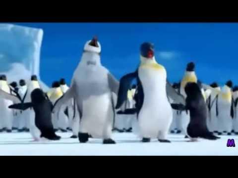 The Penguin Song Happy Birthday Youtube