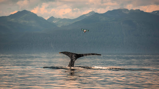 How Drone Technology Is Helping Scientific Wildlife Res | Fast Company
