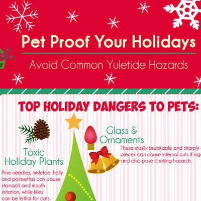 Pet Proof Your Holidays: Avoid Common Yuletide Hazards