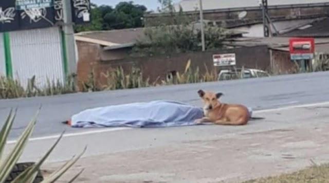 Lealdade: Homem de Caatinga do Moura morre atropelado e cão permanece ao seu lado