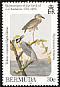 Yellow-crowned Night Heron Nyctanassa violacea