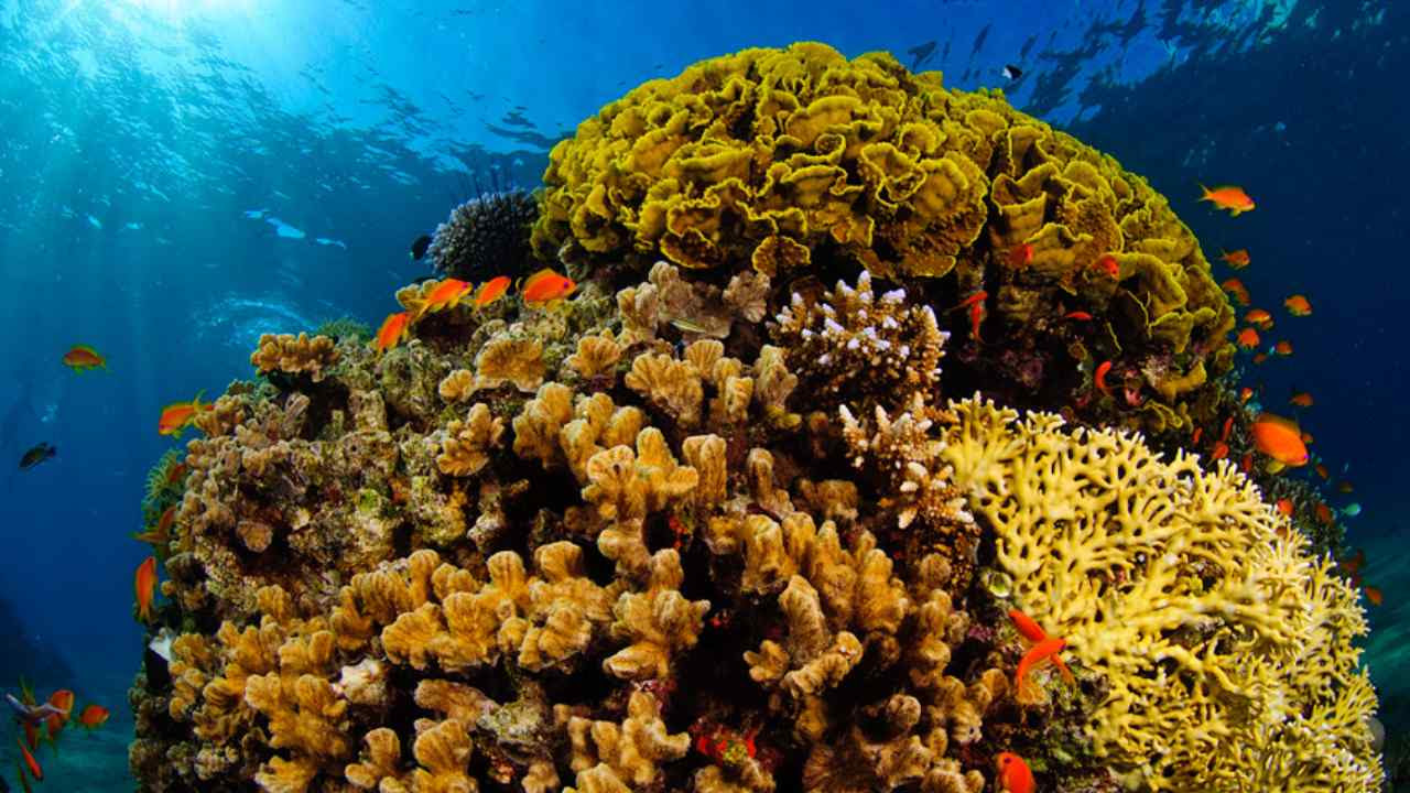 Eilat's coral beach reserve extends some 1.2 kilometres (almost a mile) off the city's coast, protecting reefs that are home to a rich variety of marine life. But their proximity to the EAPC port puts them at grave risk. Image credit: Wikipedia