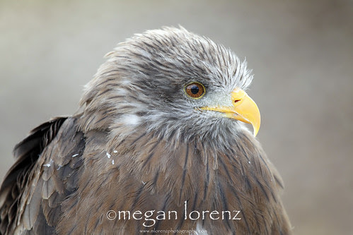 Fluffy Feathers by Megan Lorenz