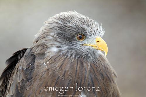 Fluffy Feathers by Megan Lorenz