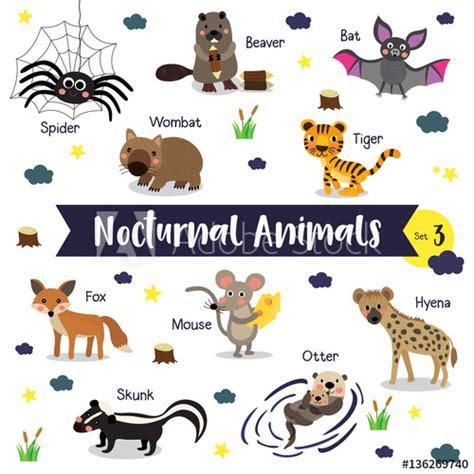 nocturnal animals cartoon  white background  animal