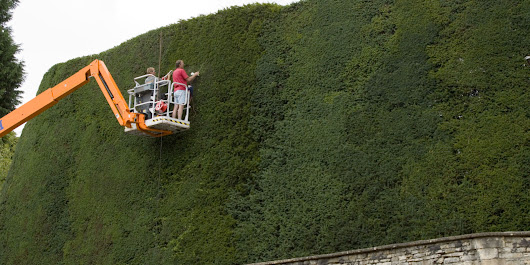 The Cotswolds is home to the world's tallest yew hedge