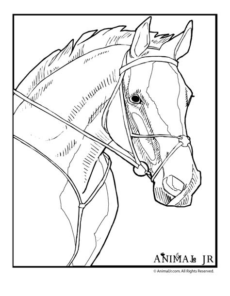 animal jr horse head coloring page