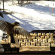 Real Birds Send Messages on Twitter by Feeding on Pieces of Pork Fat That are Attached to a Keyboard