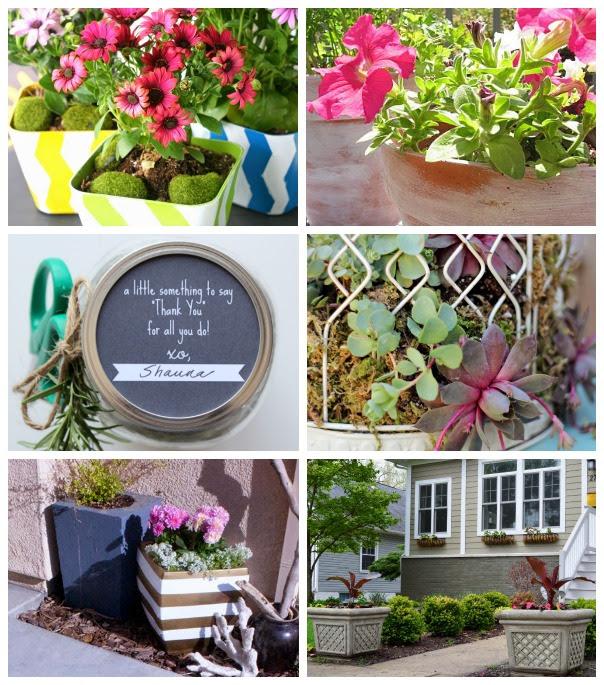 Outdoor Extravaganza Plants & Flowers (2014)