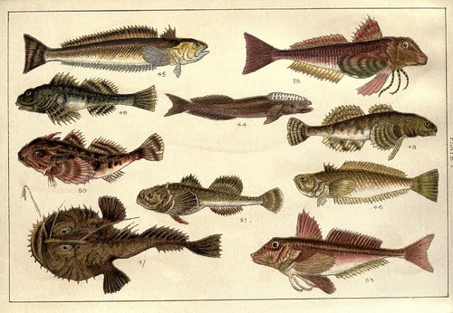 Our country's fishes and how to know them - a guide to all the fishes of Great Britain WJ Gordon 1902 o