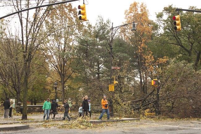 Hurricane Sandy, Prospect Park