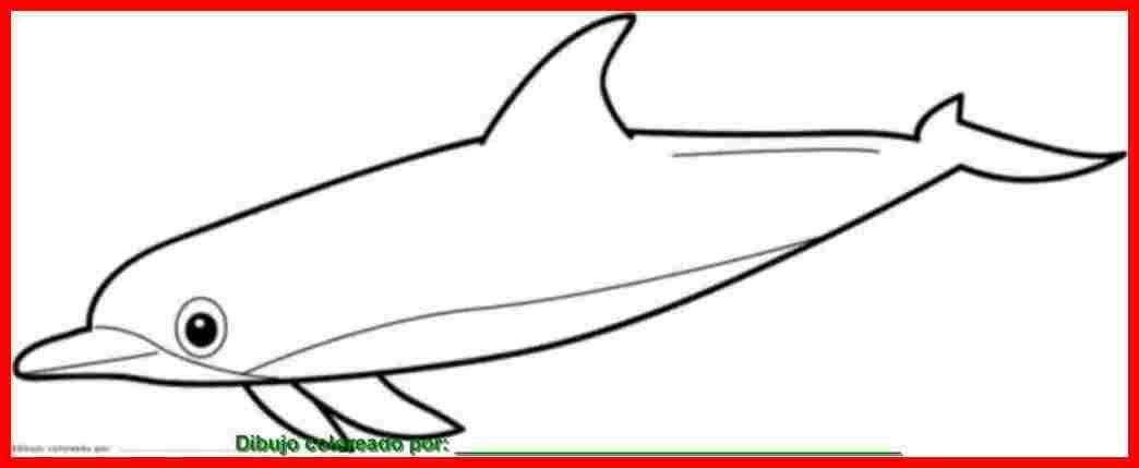 Dibujo De Animales Marinos Para Colorear E Imprimir