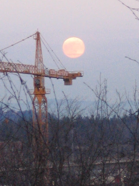 crane_moon
